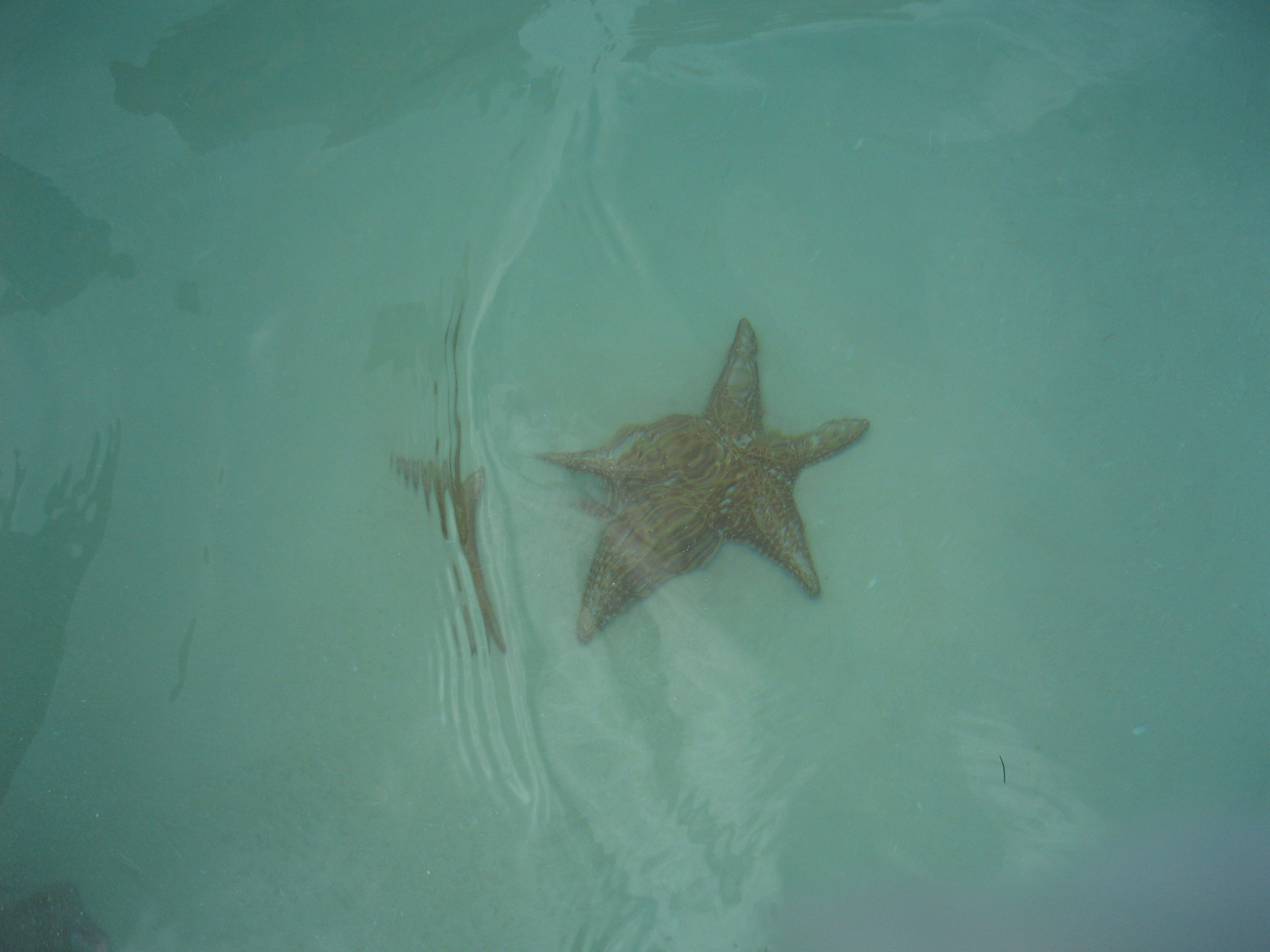Starfish in the natural swimming pool