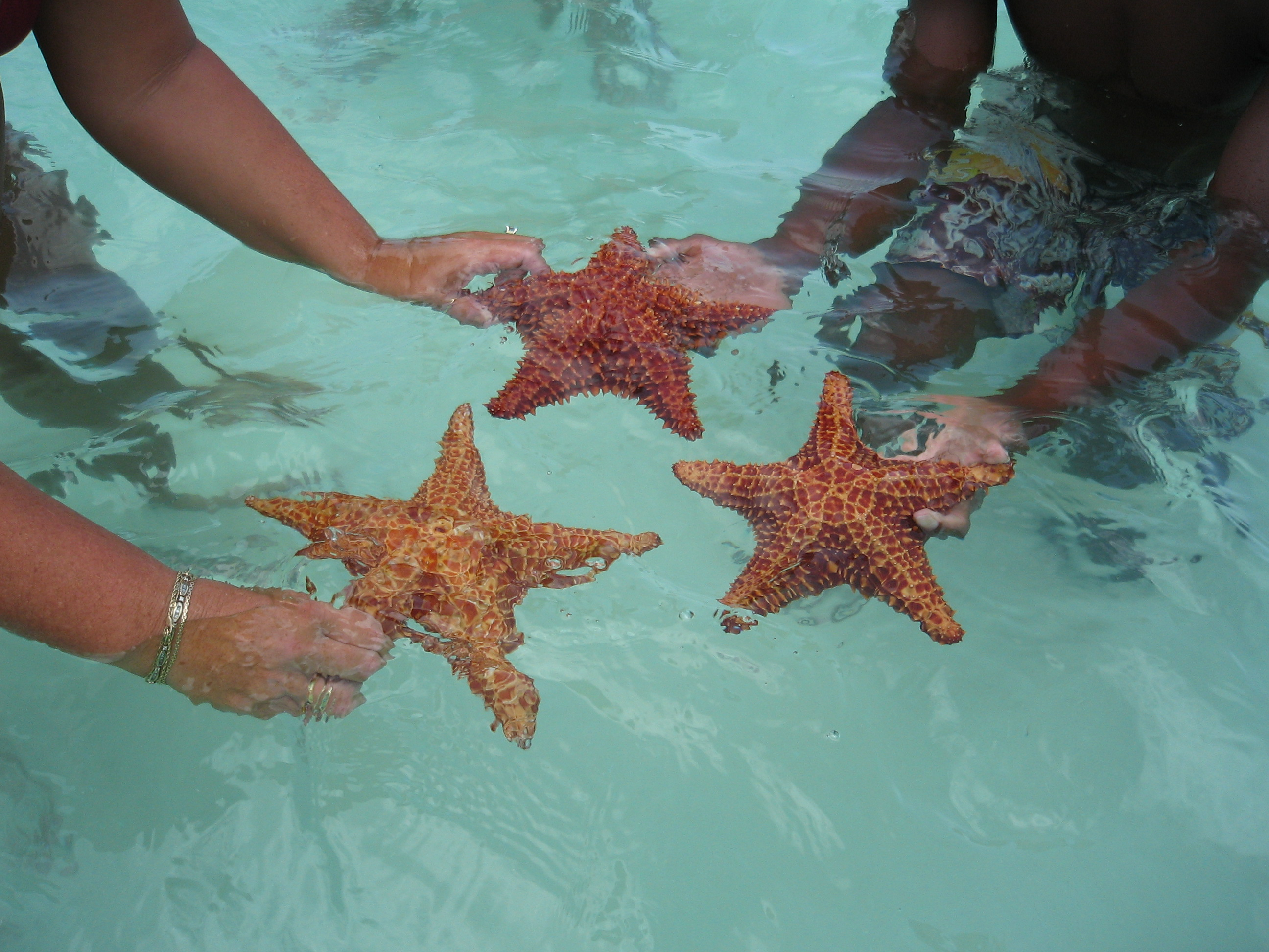 3 starfish from the natural swimming pool